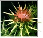 More About UltraThistle